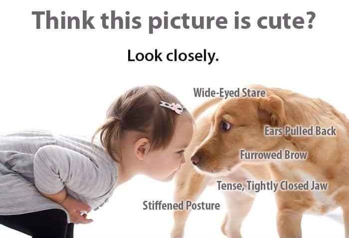 Dog Bites in Children and the Psychological Effects